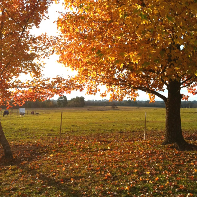 Magical Autumn- Camden NSW -My home town