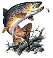Image result for salmon fish drawings