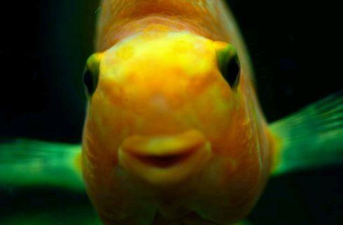 Mese az irodistáról, a halakról, az álomról