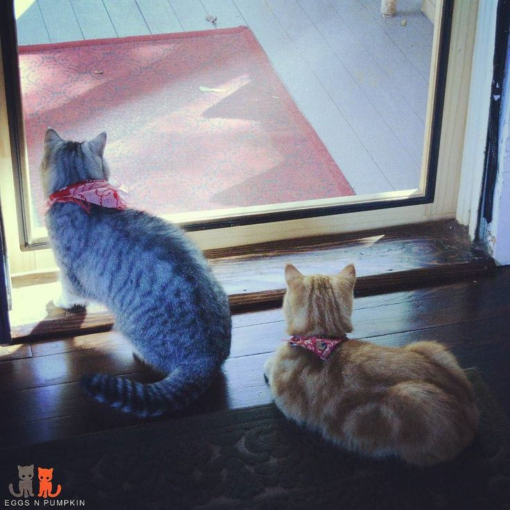 #animallovers - Instagram hashtag Photos & Videos • TagsFeed