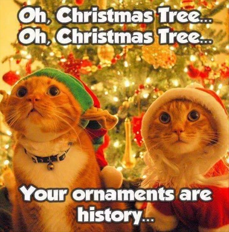 Time to put down the ornaments till next year Tap the link for an awesome selection cat and kitten products for your feline companion!