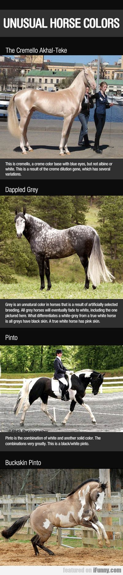 Unusual Horse Colors. I want the Cremello