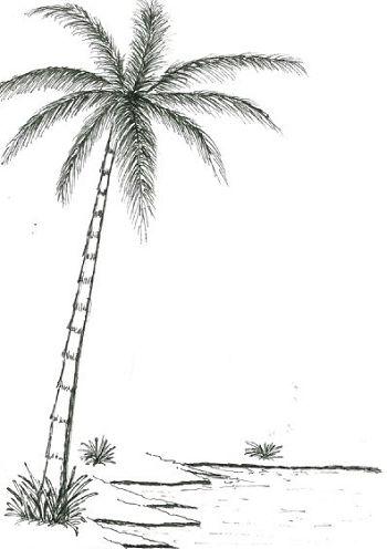 Dessin palmier plage