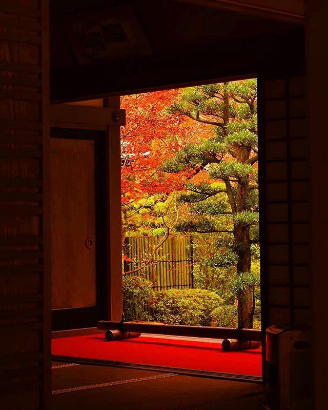 🍂🍁waiting for autumn colors, Shiga in Japan (24/11/2015)🍂🍁 . 🍂🍁J'attends ces couleurs d'automne au Japon(24/11/2015)🍂🍁 . 🍂🍁紅葉の季節が待ち遠しい!(写真は昨年11月24日撮影です)🍂🍁 . #金剛輪寺 #滋賀 #紅葉 #秋 #もみじ #庭 #東京カメラ部 #カメラ女子 #写真好きな人と繋がりたい #ig_japan #autumn #japanautumn #redleaves #autumncolors #japantrip #japangram #ilovejapan #temple #garden #zen #shiga #湖東三山 #日本の絶景