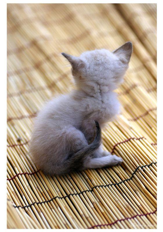 StudioNyanの作品をご覧いただき、ありがとうございます。可愛い猫ちゃんの後姿のポストカードです。特厚0.33mmの用紙に印刷します。POST CARD...|ハンドメイド、手作り、手仕事品の通販・販売・購入ならCreema。