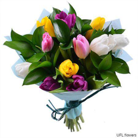Bouquet «11 tulips»