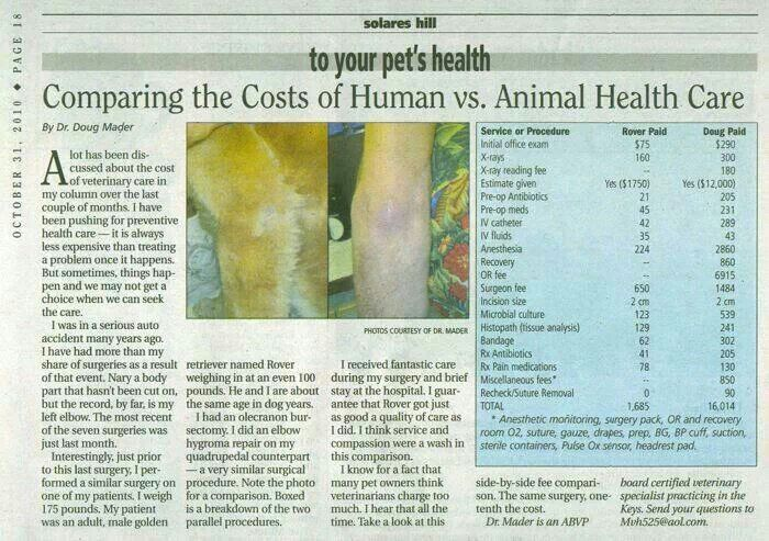 Pin by S James on Pittie Luv Pet health, Veterinary care