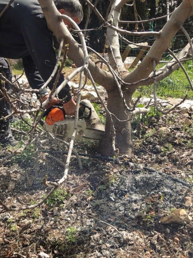 How To Prune Fruit Trees To Keep Them Small Fruit Trees Tree