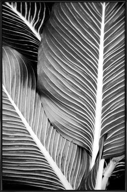 Tropical Leaves - Froilein Juno - Poster im Kunststoffrahmen