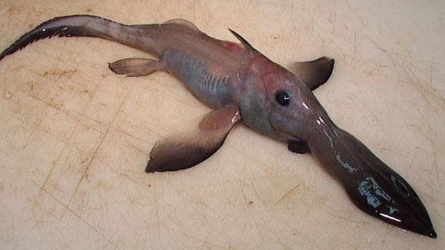 These 20 Creepy Creatures Living In Our Oceans Will Give You A Fright!