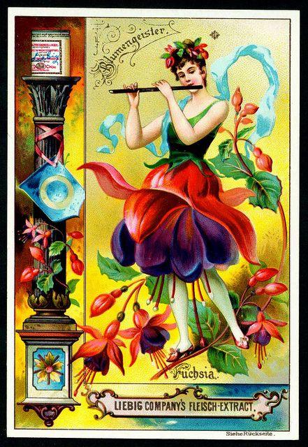 "Liebig S445 Flowers Girls 1895 #4 | Liebig Beef Extract ""Flo… | Flickr"