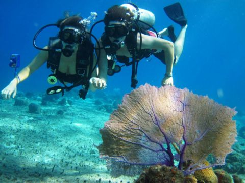 Best Plongée Sousmarine Images On Pinterest Travel Costumes - The snorkeling guide to florida 10 spots for underwater exploring