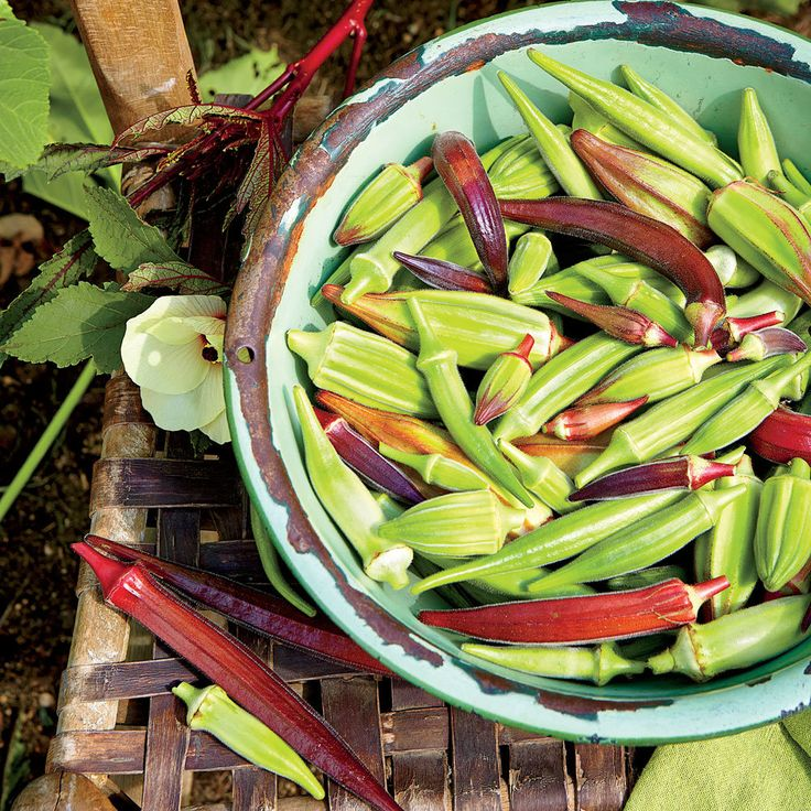 A Guide To Growing Okra
