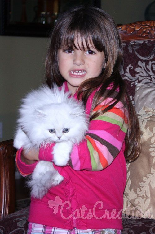 Teacup kitten breeder specializing in doll faced Chinchilla, White, and Silver Teacup Persian Kittens. Check out our Cute Persian Kitten Photos! Worldwide delivery is available. #persiancatdollface