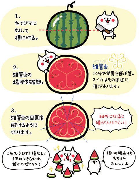 去年NHKの【すイエんサー】でみた、種なしスイカにするための切り方です