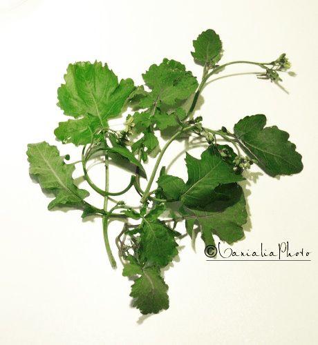 verdure-spontanee-caluceddi-immagine.JPG