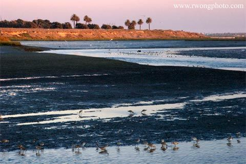Bolsa Chica Wetlands Ecological Reserve At Twilight, California   Avian  Stock Photography, Bird Pictures, Nature Photos For Editorial, ...