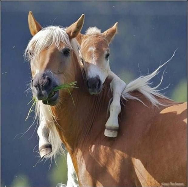 Horses hug, Dump A Day Cute Animal Pictures - 40 Pics