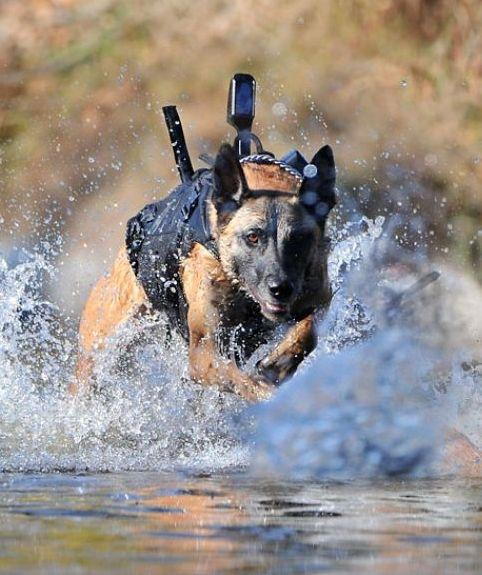 War Dogs that helped catch Osama Bin Laden