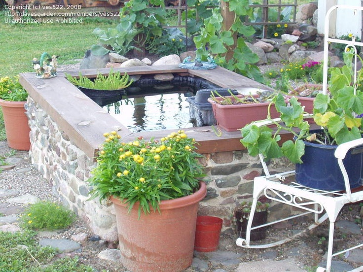 Raised pond garden pinterest raised pond pond and for Raised garden pond ideas
