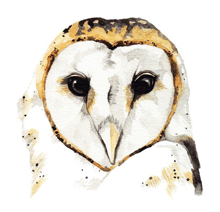 Barn Owl Watercolour Painting By Katrina Sophia