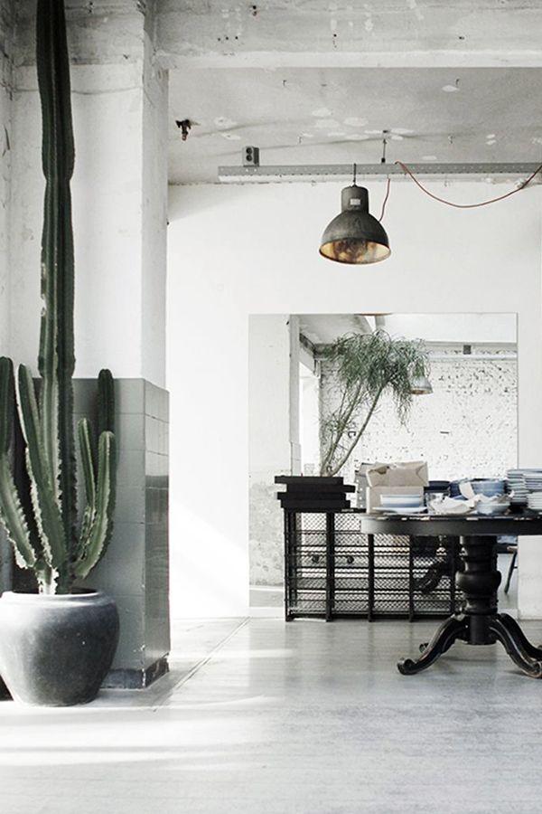 living  cactus