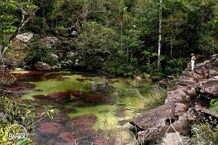 Conoce Caño Cristales, uno de los atractivos naturales principales de Colombia! http://awake.travel/es/expedicion/viaja-cano-cristales-todo-incluido-desde-bogota-3-dias-2-noches