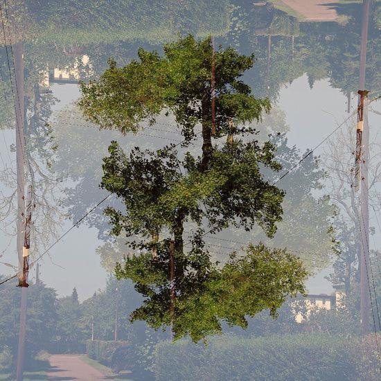 Urbane Landschaft, Bäume
