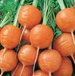 Carrot- Paris Market