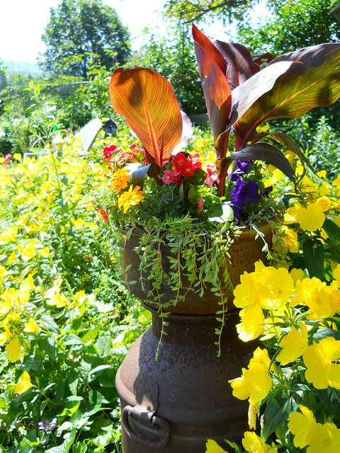 Cottage garden style: Tropical-leaved Tropicanna cannas in container in colorful cottage garden. by tesselaarusa, via Flickr