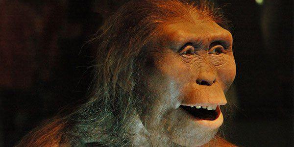 Australopithecus afarensis, Lucy.