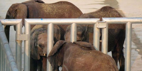 petition: NO MORE EXPORT OF BABY ELEPHANTS! STOP EDEN GAME FARM IN NAMIBIË FROM SELLING 5 BABIES TO A DUBAI ZOO!