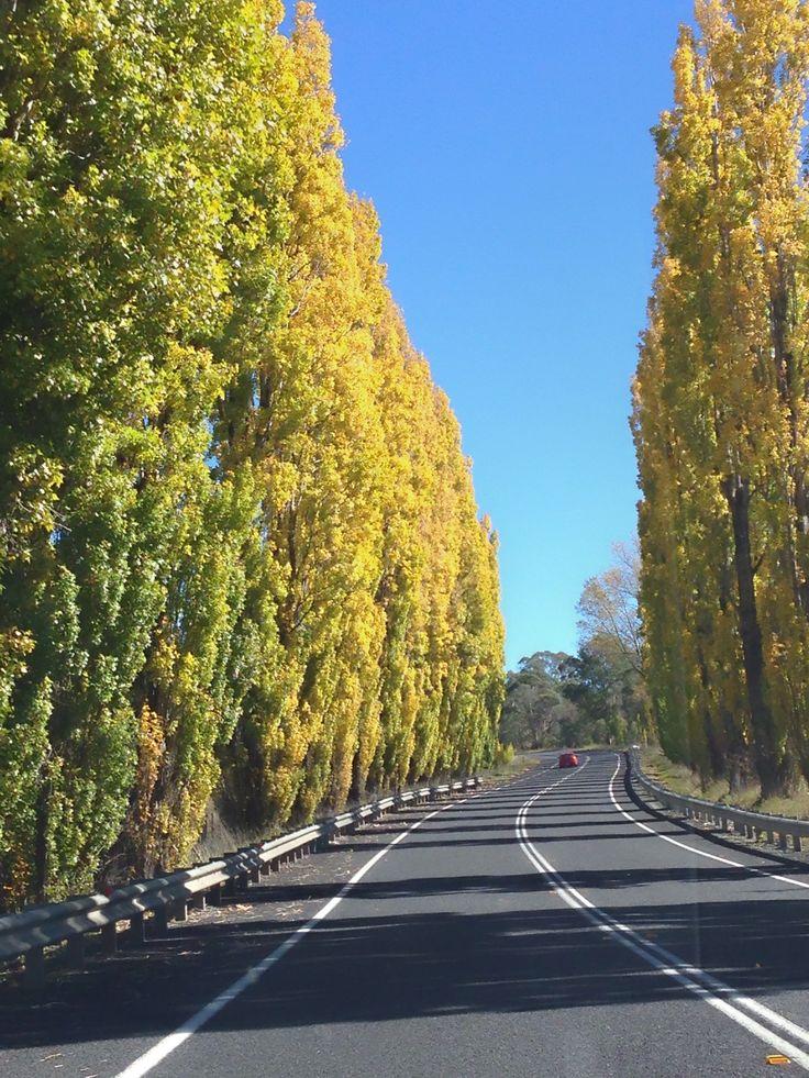 Glen Innes in New South Wales