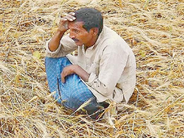 Fields of woe: How unseasonal rains have affected India's farmers - The Economic Times