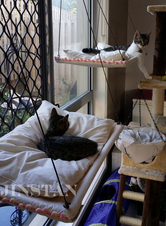 sunset cat hammock with cushion 274 best cats images on pinterest   pets cat stuff and cute kittens  rh   pinterest