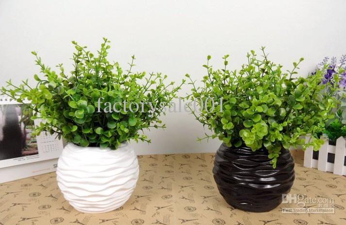 Eucalyptus Potted Plant