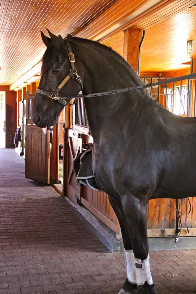 Dream Horse? more like dream barn, but the black horse is beautiful!