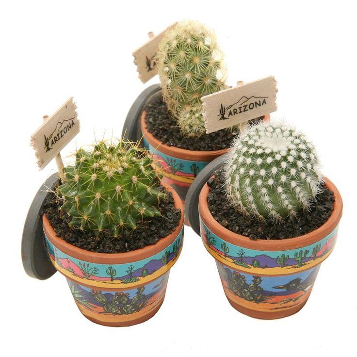 Mini Cactus Magnets These Mini Cactus Magnets Feature 640 x 480