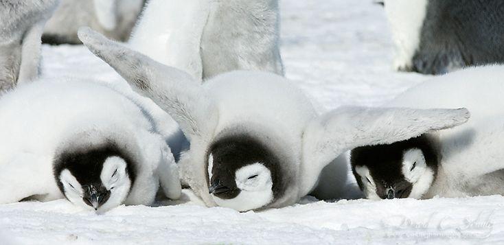 penguin-awareness-day-photography-13