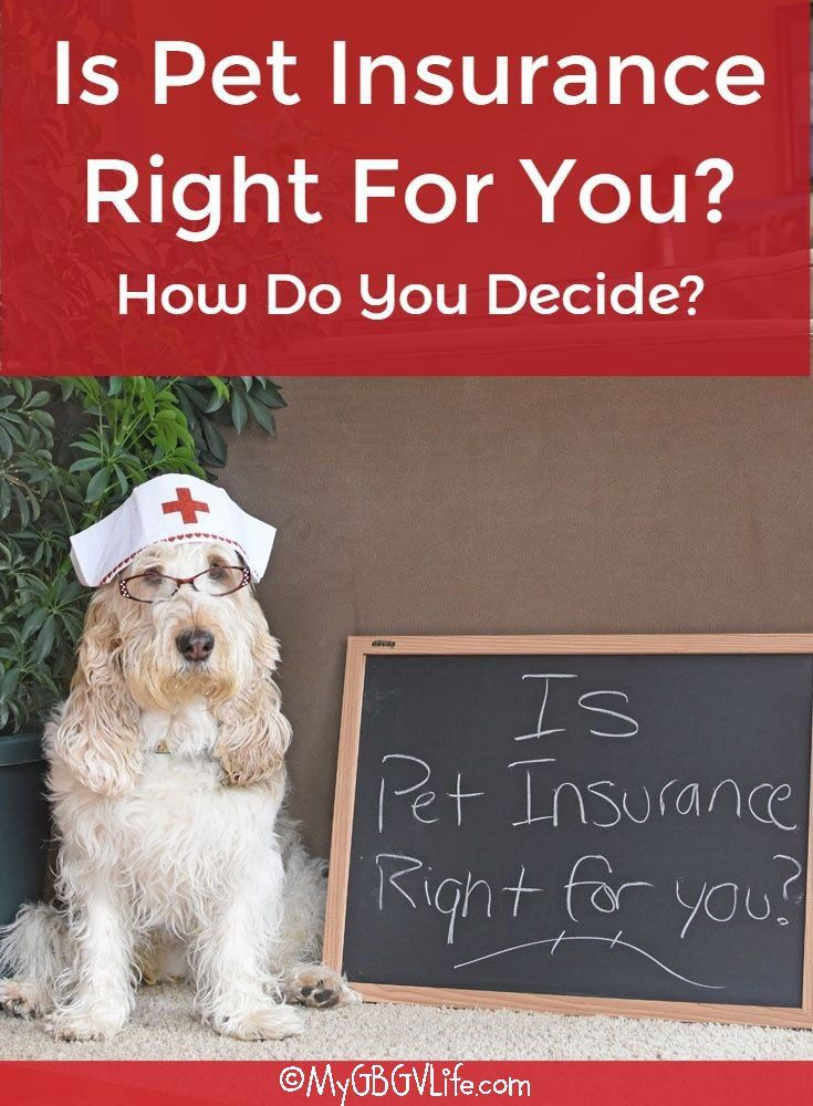 Is Pet Insurance Right For You How Do You Decide Pet Insurance