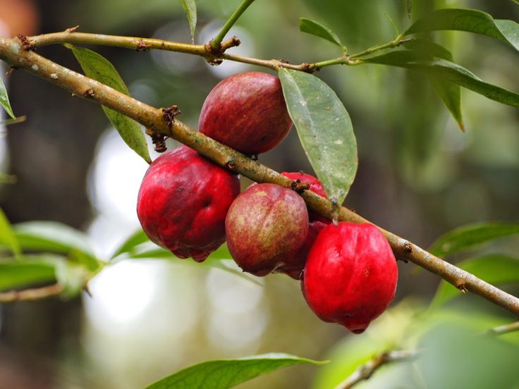 Obat Wasir Herbal atau Obat Ambeien Herbal bersertifikat halal LPPOM MUI | obat wasir herbal