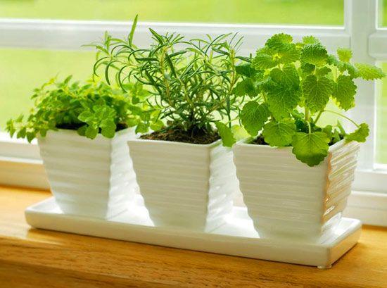 Как устроить домашний огород на подоконнике вместе с ребенком
