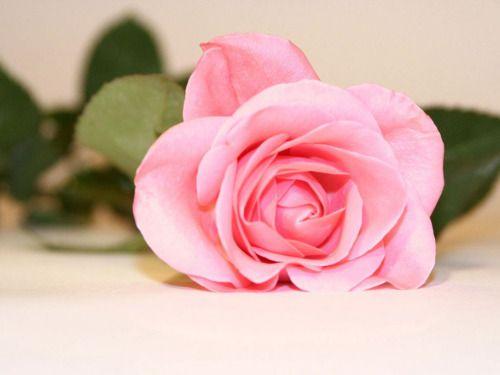 Resultat d'imatges de tumblr rosa