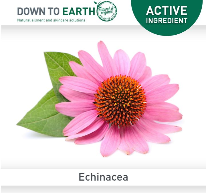 Echinacea is widely used to fight infections, however it is also used in topical applications to treat boils, eczema, psoriasis, sun-damage, herpes simplex, bee stings, mosquito bites and haemorrhoids.