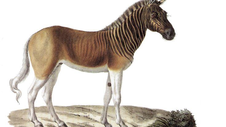 6 animais extintos que deixaram saudades | Discovery