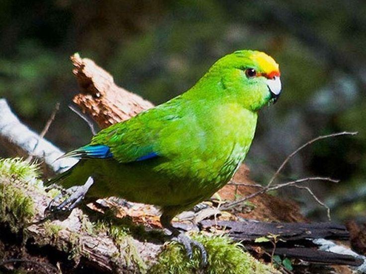 Bird Sanctuaries in Chhattisgarh, India @ Sanctuariesindia.com