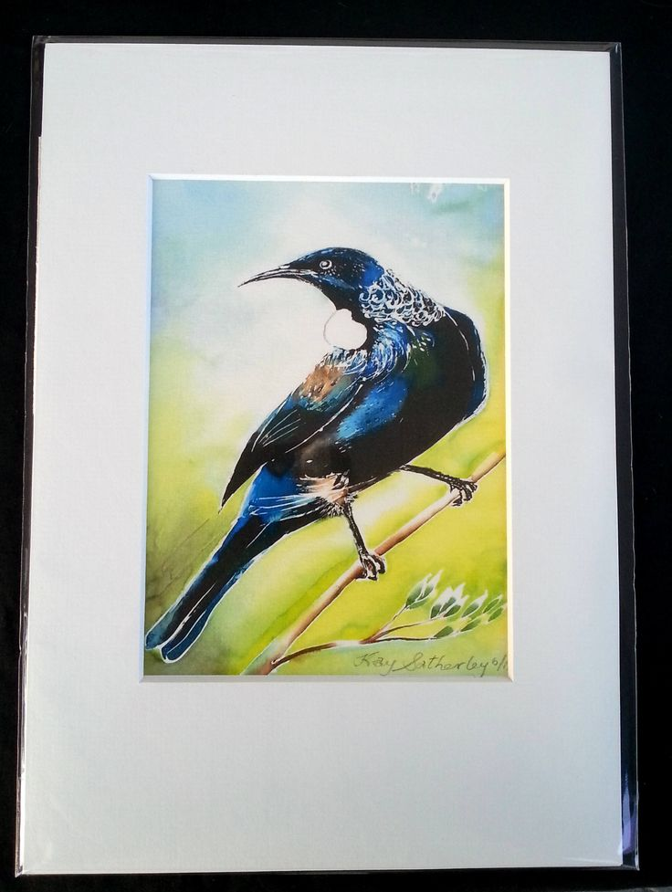 New Zealand Tui Bird Print, Bird Art Print from Silk Painting, Fine Art Print, Decor Lounge Wall Art, A4 size, 21 x 14cm, A5 with Mat Board by KaySatherleyArt on Etsy