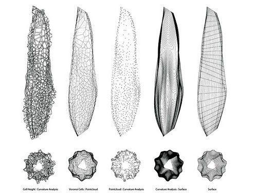 1000  images about voronoi