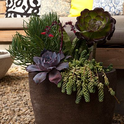 Mixed succulents in a pot: Plants Can, Succulents Can, Small Backyard, Easy Cars Plants, Venice Gardens, Gardens Makeovers, Succulent Planters, Backyard Makeovers, Gardens Plants