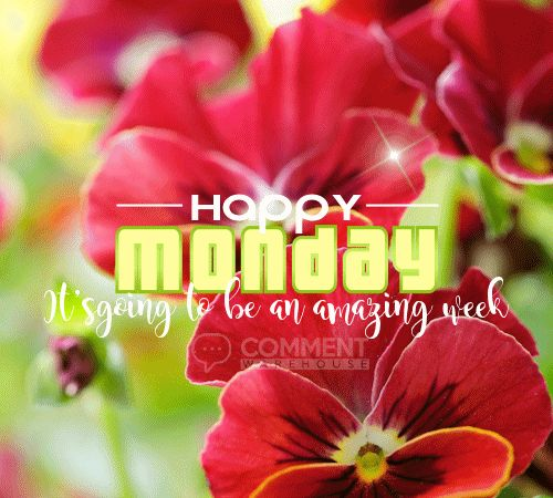 Happy Monday Its Going to be an Amazing Week | Monday Graphics Monday Pics Happy Monday Images Quotes Greeting Good Day - more at commentwarehouse.com